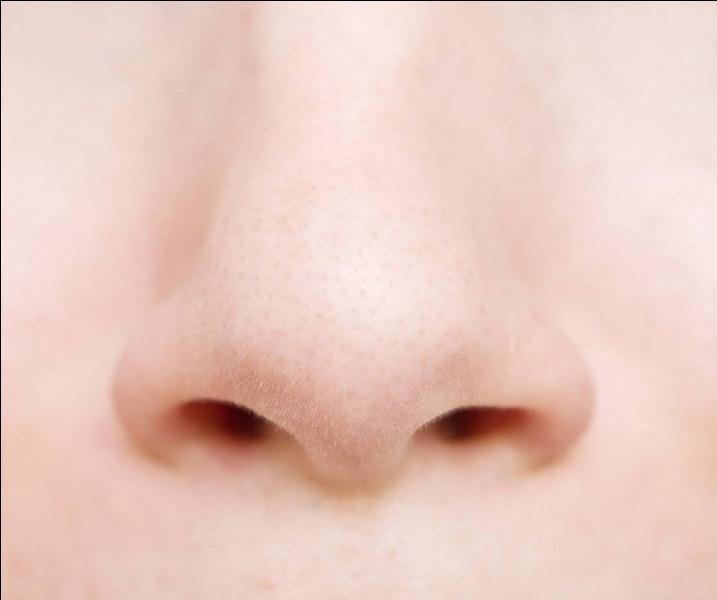 """Que signifie l'expression """"être nez à nez"""" ?"""