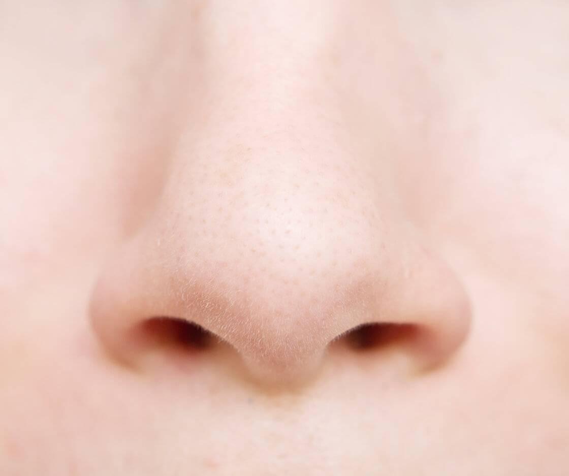 Tout savoir sur le nez et l'odorat