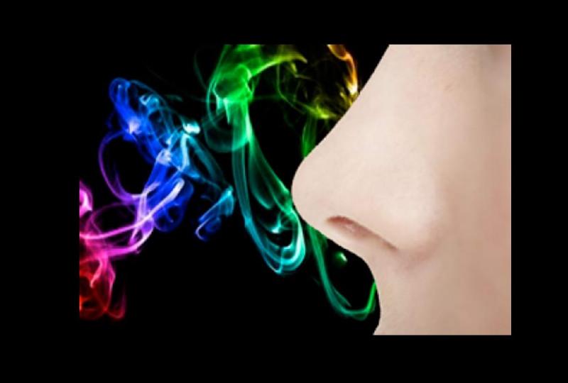 Combien d'odeurs les meilleurs nez sont-ils capables de mémoriser ?