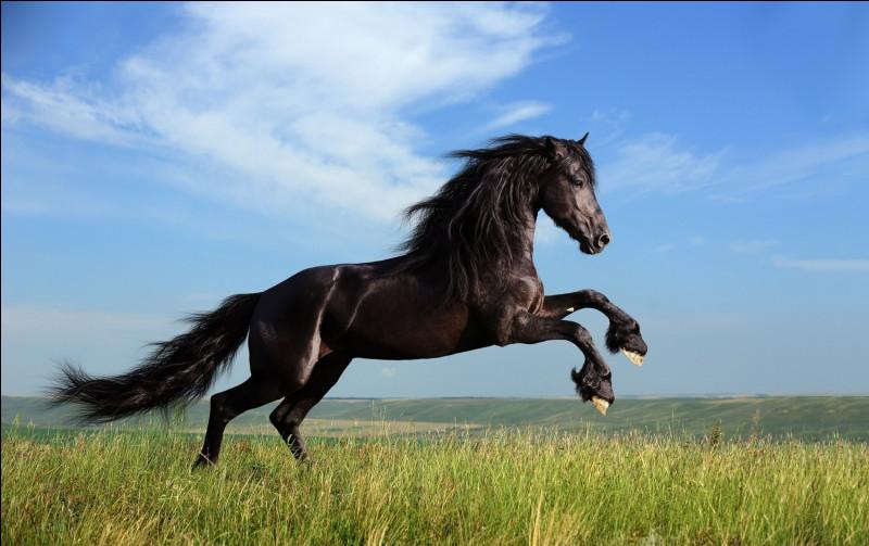 Que fait ce cheval ?