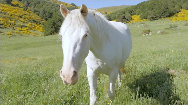 Connais-tu bien les chevaux ?