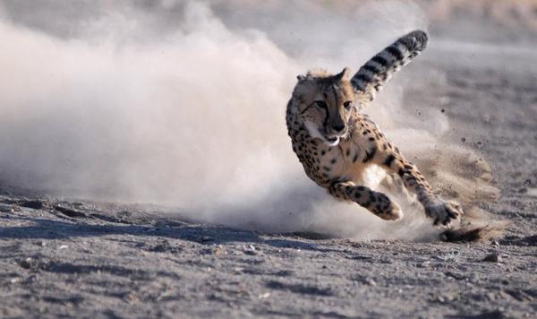 Safari, en avant !