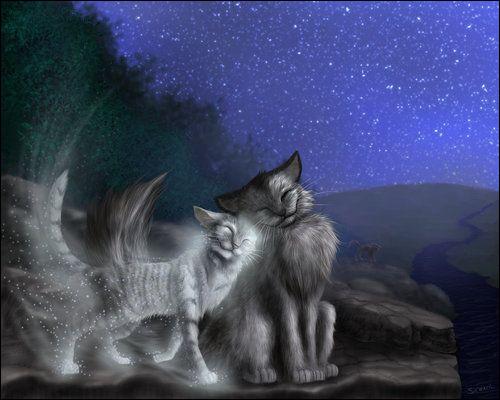 Qui est ce joli couple de chats ?