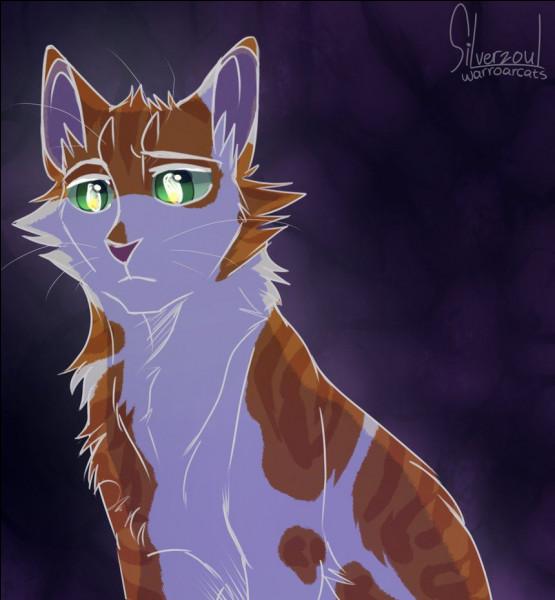Connaissez-vous ce chat ?