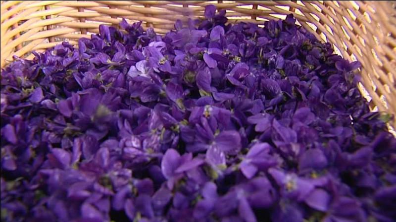 Quelle commune des Alpes-Maritimes (06) est réputée pour ses violettes ?