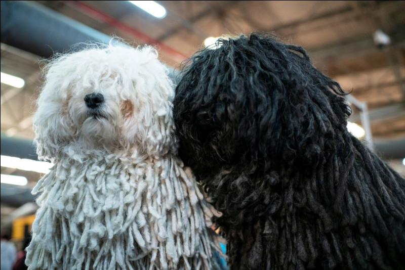Tu préfères les chiens aux poils :