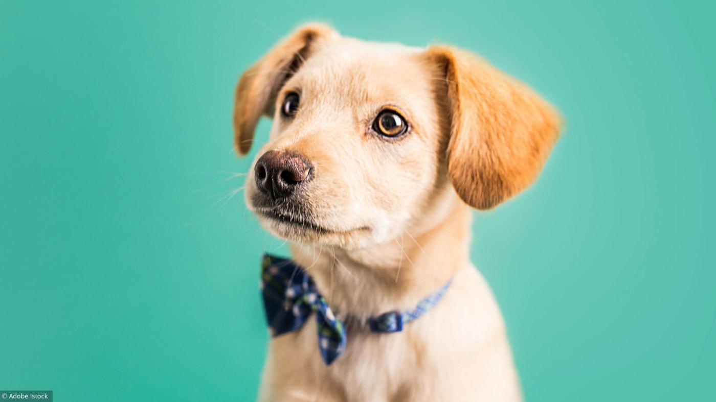 Quelle race de chien es-tu ?