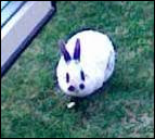 Comment s'appelle ce petit lapin trop mignon ?