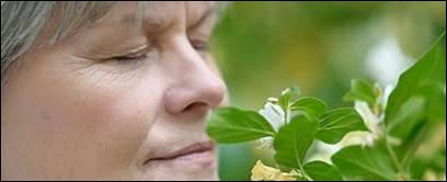 Selon Kant, de quoi l'odorat est-il le parfait opposé ?
