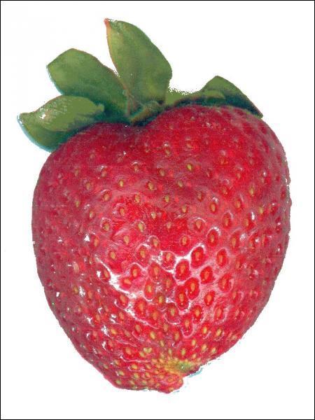 C'est une fraise, OK, mais est-elle mangeable ?