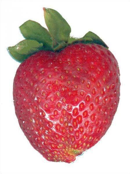 Les fruits !