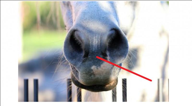 Comment nomme-t-on cette partie du nez du cheval ?