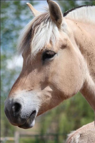 Comment se nomme la robe d'un cheval fjord ?