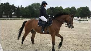 Citez le plus grand champion du monde d'équitation en 1990.