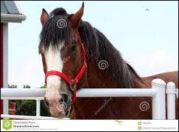 Quel est le premier pays ayant commencé l'équitation ?