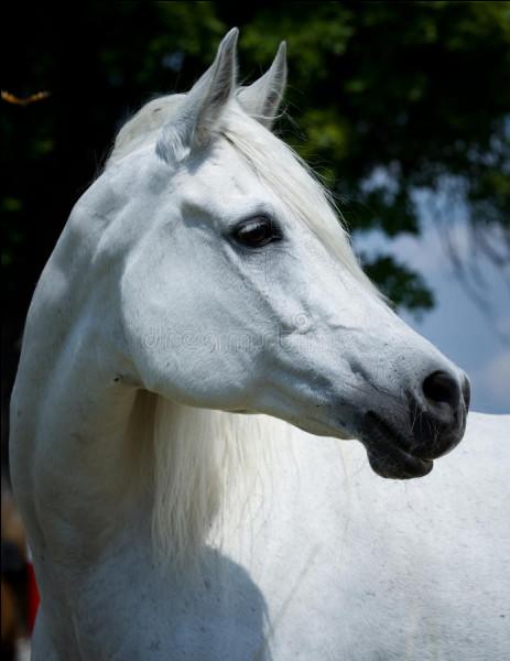 Comment se nomme la partie du corps du poney au-dessus de l'œil à côté du rocher ?