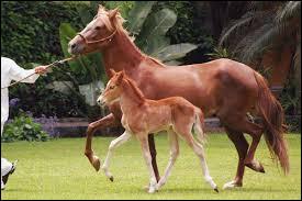 Quelle est la vitesse moyenne d'un cheval ?