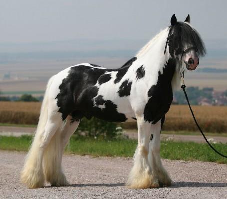 Connais-tu parfaitement le cheval ?