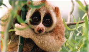Cet animal trop mignon est-il dangereux ?