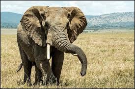 Les éléphants peuvent-ils sauter ?