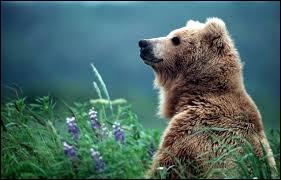 Quelle est la différence entre les animaux à sang chaud et à sang froid ?