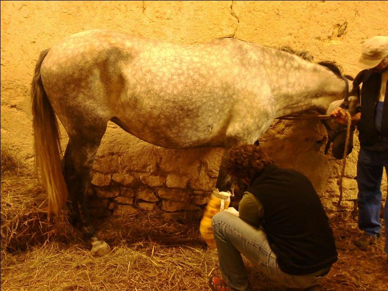 Je travaille en collaboration avec l'éleveur. Je dois connaître le comportement des chevaux, le cycle de reproduction et les différentes phases du poulinage. J'assure le suivi nocturne de l'activité dans les écuries et aide, en cas de difficulté, la poulinière et son nouveau-né. Je dois bien résister au sommeil. Qui suis-je ?