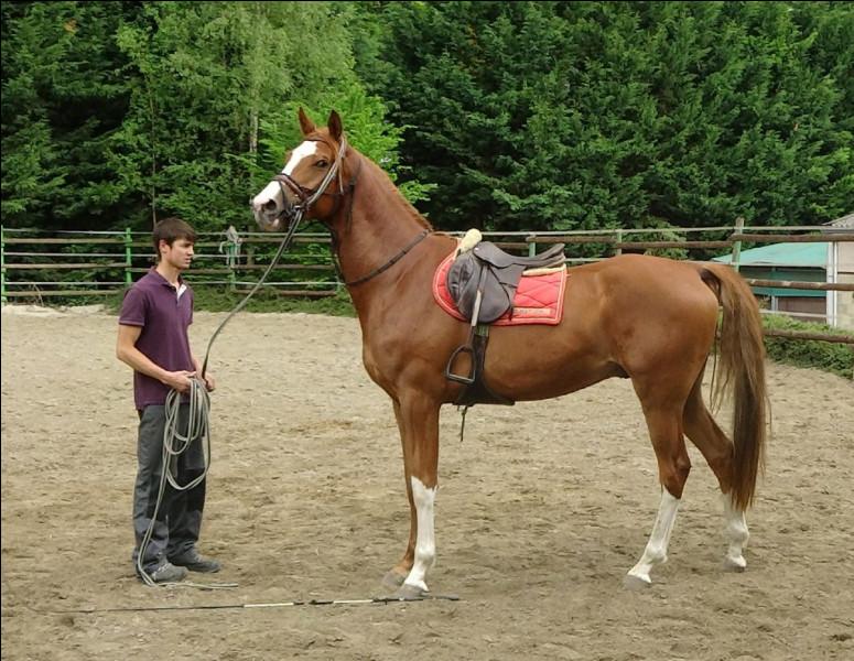 J'entraîne les jeunes chevaux âgés de 18 mois à 2 ans à porter le poids d'un cavalier, porter une selle sur leur dos, accepter le mors... J'éduque aussi bien pour la course que pour un cheval de reprise. Mon travail consiste également à ce que le cheval soit prêt physiquement et mentalement, ainsi qu'il sache développer une relation avec l'humain. Qui suis-je ?