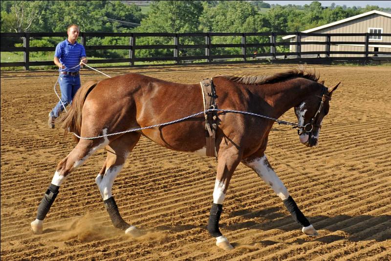 J'entraîne les chevaux aux compétitions, psychologiquement et physiquement. Pour cela, je fais suivre des cours particuliers aux équidés. Il n'est pas rare que je sois un ancien jockey et, dans ce cas, j'aiderai à préparer les pur-sang anglais à leurs courses. Qui suis-je ?