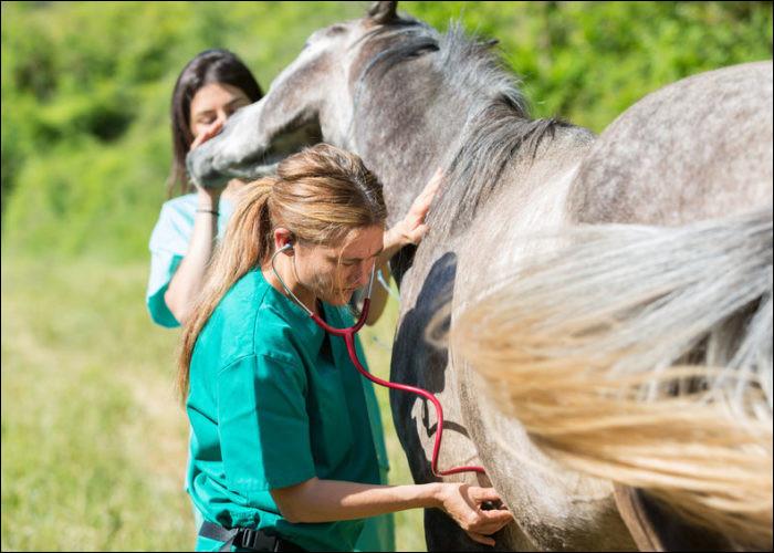 Je surveille et contrôle la santé des chevaux. Lors de compétitions, je suis impérativement présent pour m'occuper de chevaux blessés ou malades. J'ai un excellent salaire. Qui suis-je ?