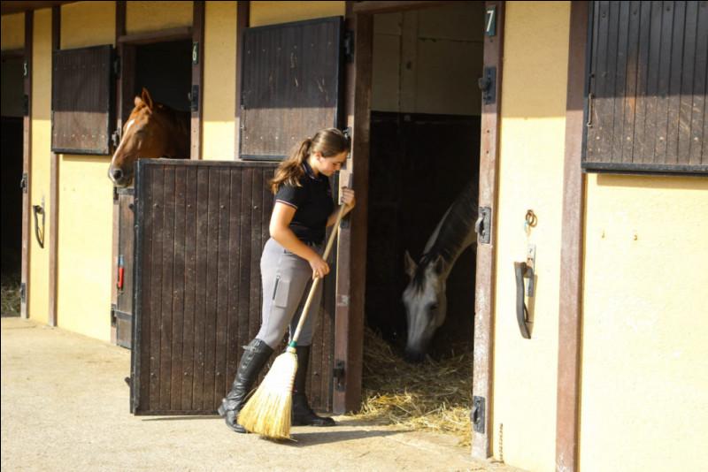 Je nettoie les stalles, les boxes, les allées. Je panse les chevaux et je les sors à l'extérieur le matin, puis les rentre le soir. Je nourris les chevaux. En gros, je fais un entretien général des écuries ainsi que de ses pensionnaires. Qui suis-je ?