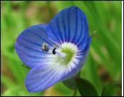 Quelle est cette fleur du genre herbacée ?