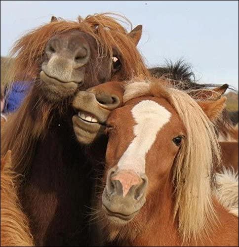 Ces trois-là appartiennent au genre Equus, de la famille des Equidae. Ils galopent sur des sabots et portent : ''une crinière de poils généralement hérissés, ou tombants quand ils sont très longs''.Il s'agit d'un des meilleurs amis apprivoisés par l'homme : quel est son nom ?