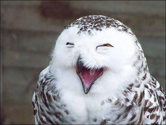 Peut-on ne pas penser qu'il vit vraiment un bon moment. Oiseau emblématique du Québec, c'est un...