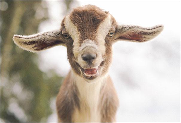 Regardez ce jeune, là, il sourit tellement qu'il en agite ses grandes oreilles flottantes. Dans cette sorte de demi-clarté, il nous apparaît bien proche d'être heureux.Ce serait une...