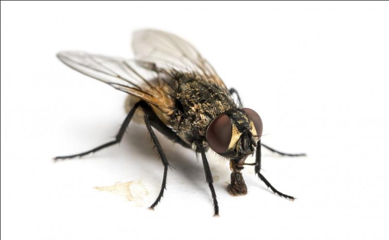 C'est une abeille :