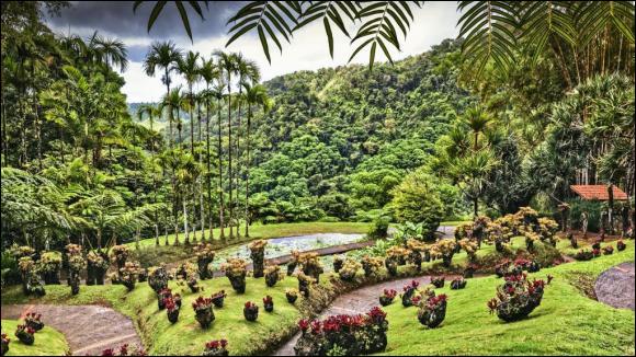 En quelle année La Martinique fut-elle découverte ?