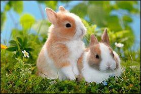 Le lapin est reconnu pour :