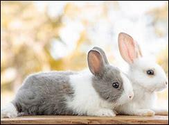 Le lapin passe le plus clair de son temps :