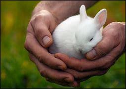 Comment s'appellent les bébés lapins ?