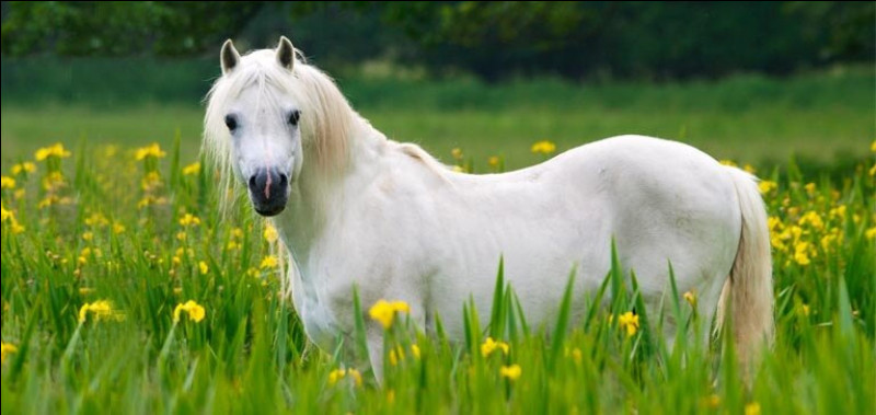 Le cheval est un mammifère.