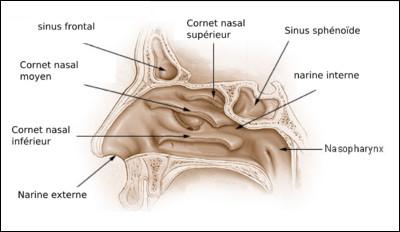 Quelle opération correspond à l'ablation partielle des cornets du nez inférieurs ?