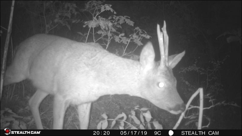 Si vous voulez photographier ou filmer un animal sauvage, comment devez-vous l'approcher pour ne pas vous faire repérer ?
