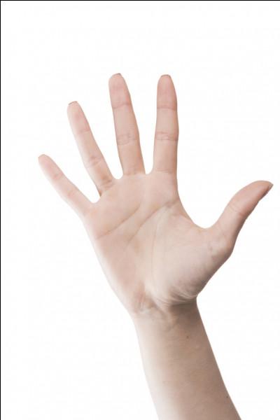 Aurais-tu peur si jamais de grosses mains s'approchaient pour te déplacer ?