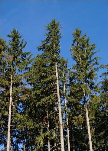 Quel pays de l'union européenne possède la plus grande superficie de forêt ?