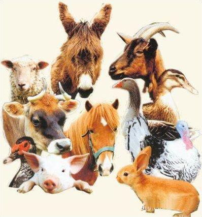Devinettes sur les animaux