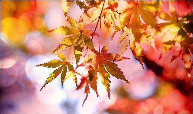 Voilà, c'est presque la fin de l'année. Les feuilles deviennent rouges, rousses, jaunes. Les feuilles tombent des arbres. Le climat se refroidit. Nous sommes en :
