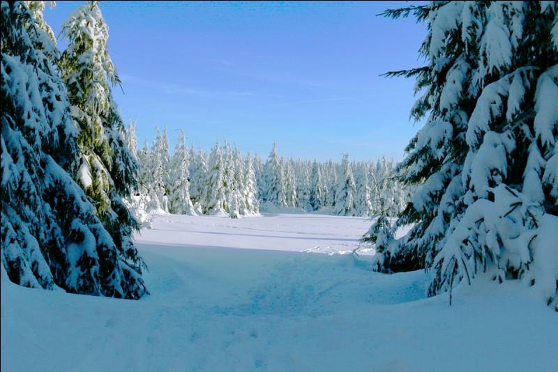 Ce matin, lorsque vous passez la tête par la fenêtre, vous voyez un paysage givré. Un peu de vert, un peu de marron sur certains feuillus pas complètement recouverts de neige. Cette belle saison blanche, vous la connaissez bien. Il s'agit :