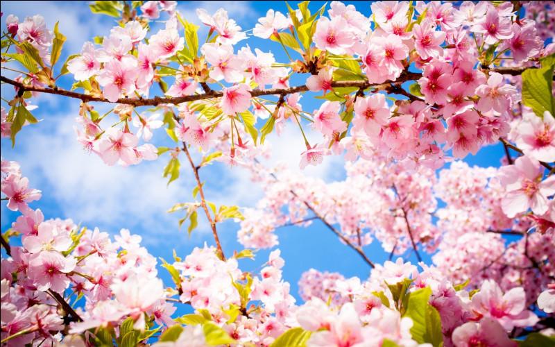 Un peu plus tard dans l'année, vous entendez les oiseaux chanter en vous réveillant. Au dehors, les fleurs jaillissent, se pavanant dans diverses nuances. Les arbres retrouvent leurs sublimes feuilles vertes. Vous en déduisez que nous sommes en/au :