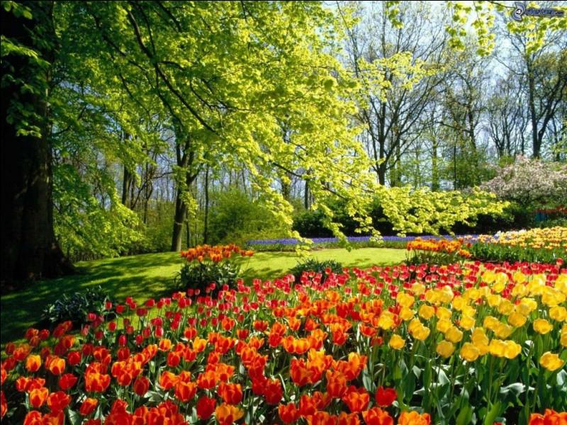 """Au printemps, nous chanterons """"C'est le printemps vraiment"""". Mais déjà, de qui est cette chanson ?"""