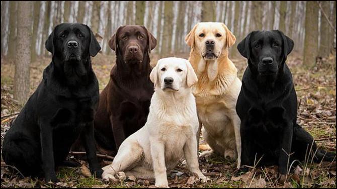 Quelle est cette race de chien ?